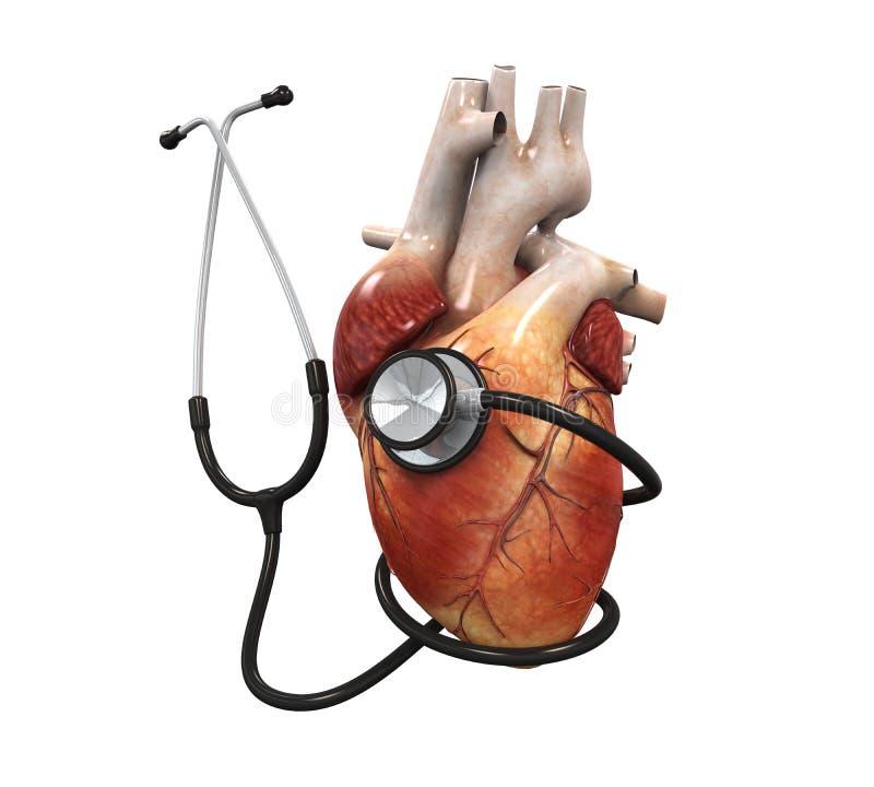 corazón y estetoscopio humanos stock de ilustración
