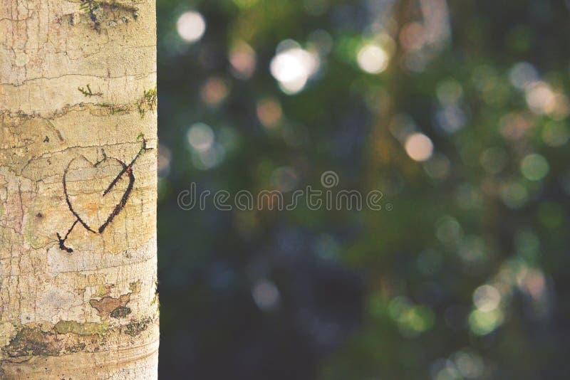 Corazón y flecha tallados en tronco de árbol fotografía de archivo libre de regalías