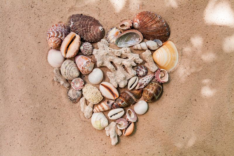 Coraz?n de las c?scaras del mar en una playa arenosa Fondo imagenes de archivo
