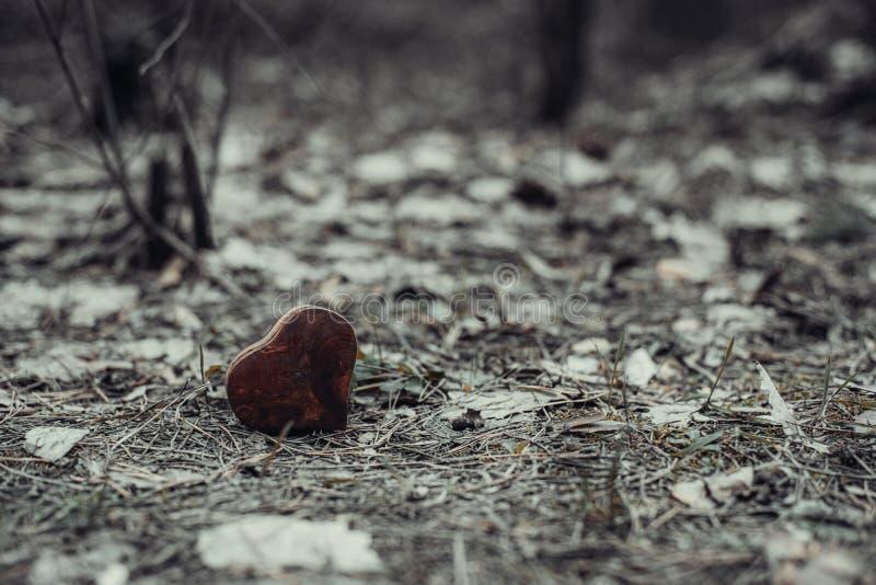 Coraz?n de madera aguja del Abeto-cono y fondo de las hojas derrochado Primer fotografía de archivo libre de regalías