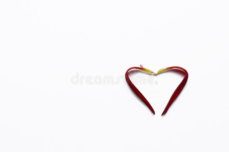 Coraz?n hecho de los p?talos color de rosa aislados en el fondo blanco romance Copie el espacio fotos de archivo