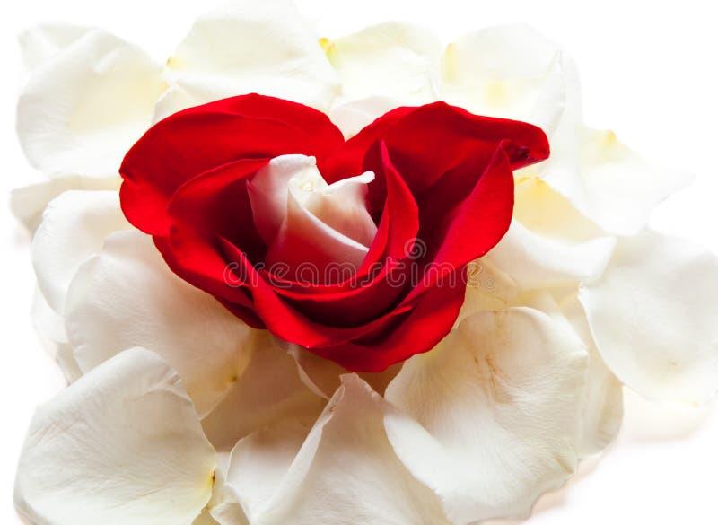 download corazones y rosas foto de archivo imagen de suave amor 21442012