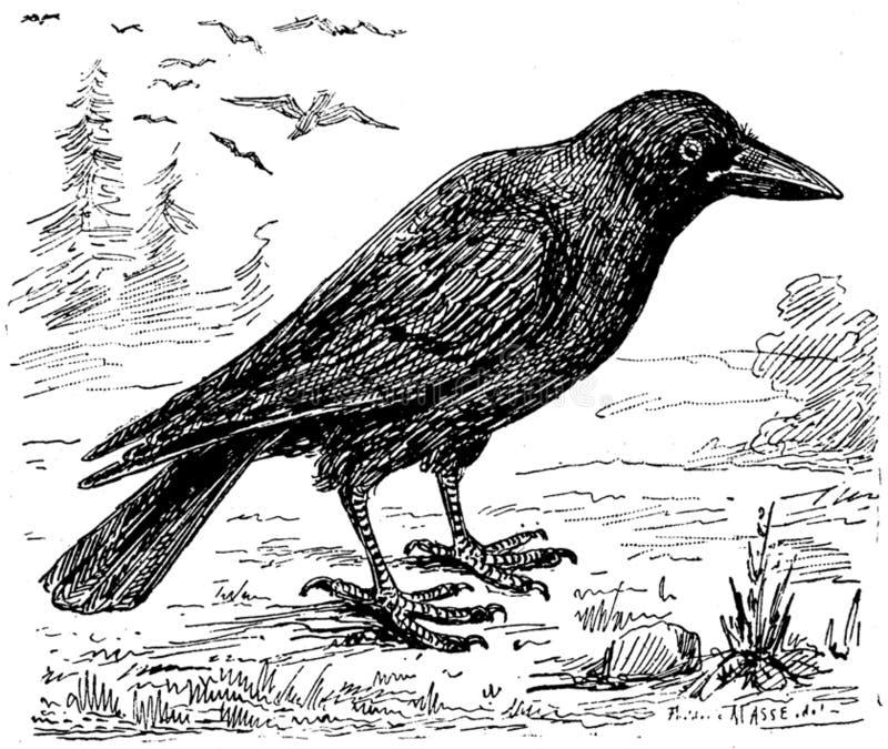 Corbeau-001-mo Free Public Domain Cc0 Image