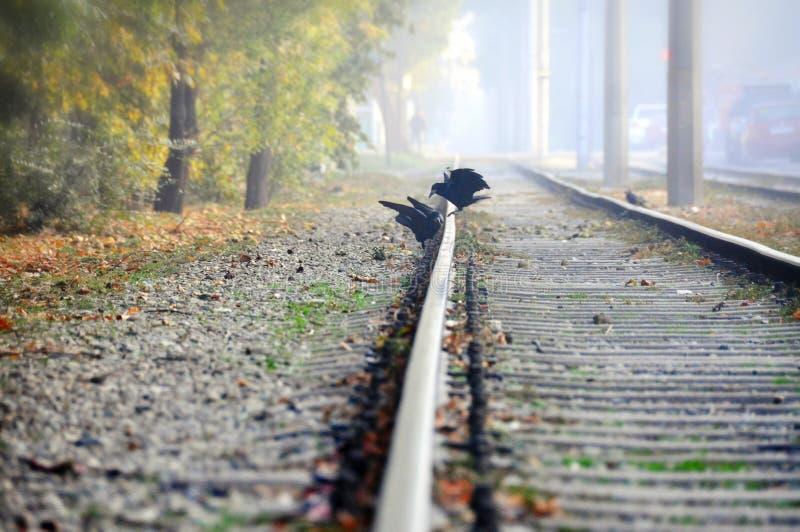 Corbeau deux sur les rails image stock