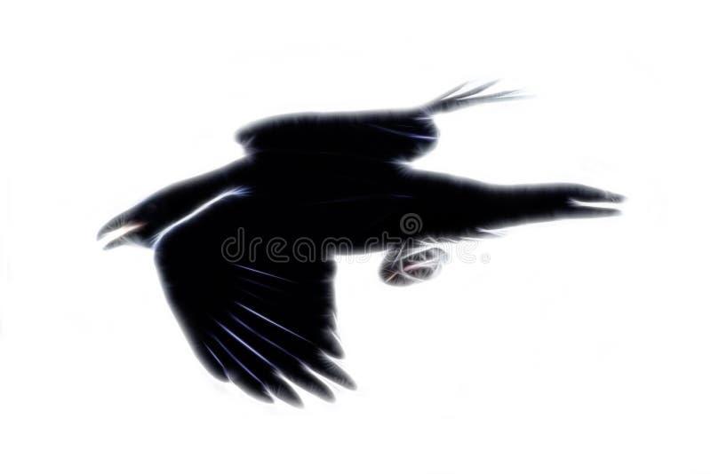 corbeau en vol, peinture animale photographie stock