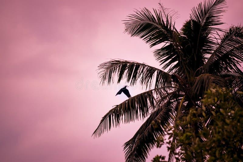 Corbeau et palmtree de vol à la lumière de soirée photos stock