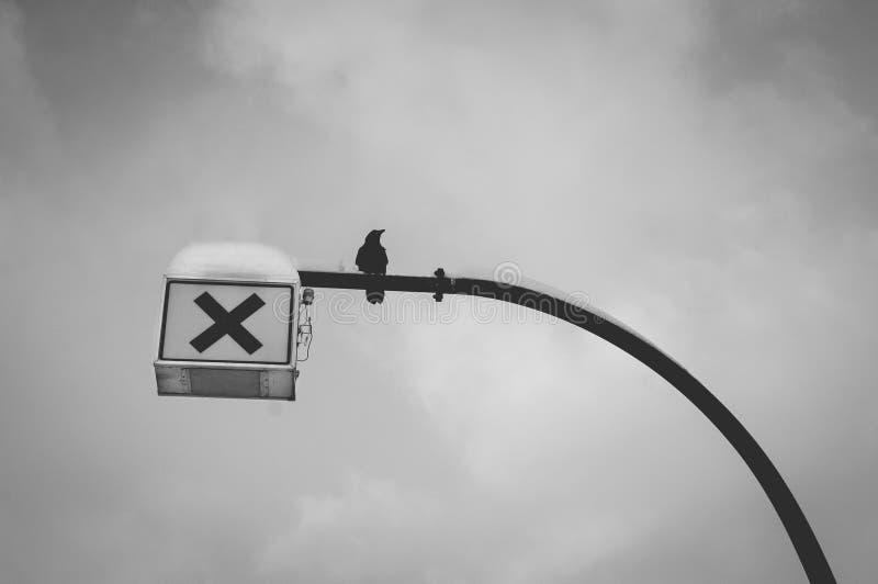 Corbeau solitaire été perché sur le poteau de passage piéton en hiver photographie stock