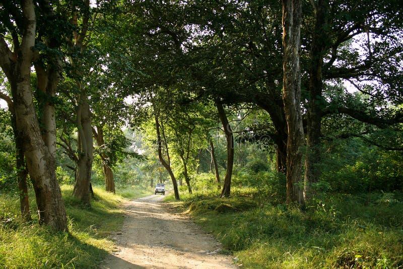 corbettindia jim nationalpark royaltyfria foton