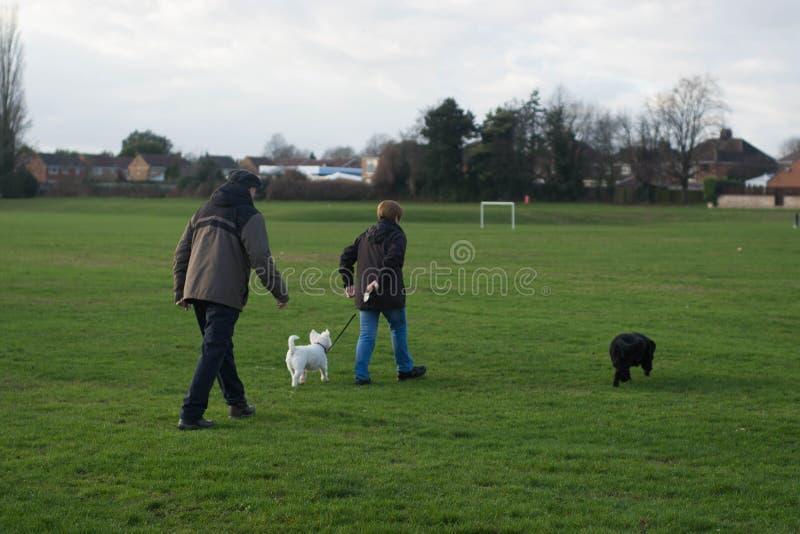 Corby, Reino Unido - 1º de janeiro de 2019: Dois pessoas que andam com cães Fora, cidade inglesa Copie o espaço imagens de stock royalty free