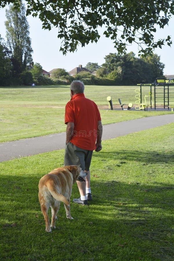 Corby, U K , 29 Juni, 2019 - een mens van rug, die zijn hond in openlucht lopen stock fotografie