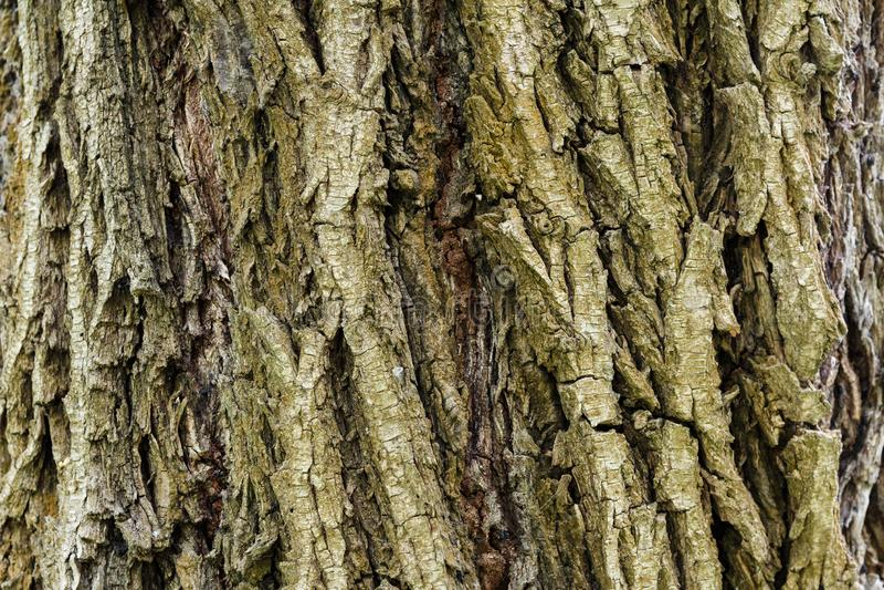 ?corce d'un arbre Texture en bois Fond en bois image libre de droits