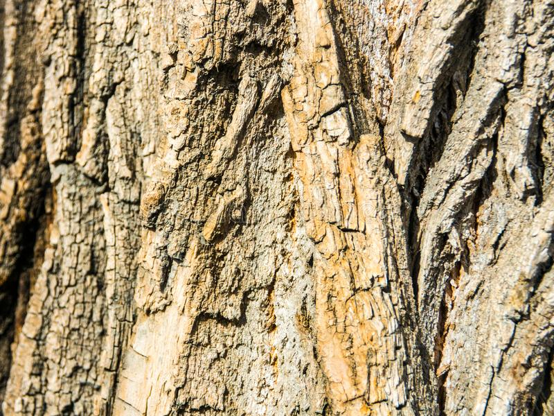 ?corce d'un fond de texture d'arbre image stock
