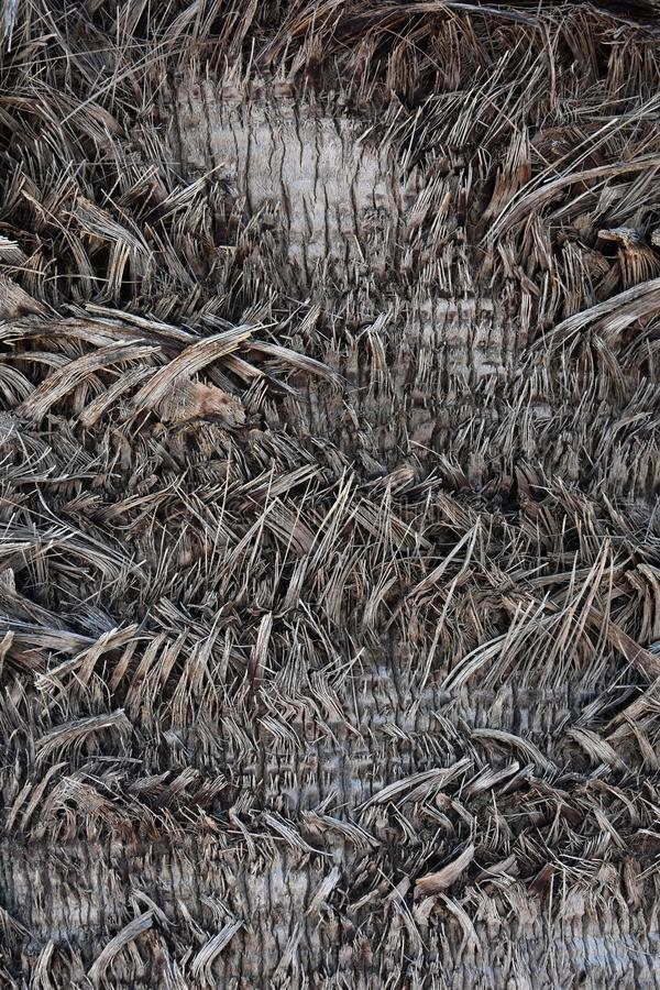?corce d'un palmier, texture images libres de droits
