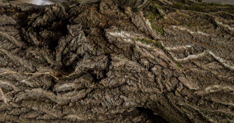 ?corce d'un vieil arbre photographie stock