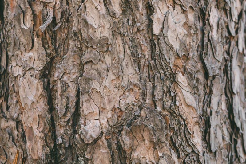 ?corce de texture et de fond de pin Vue haute ?troite de vieille et rugueuse ?corce de pin images libres de droits