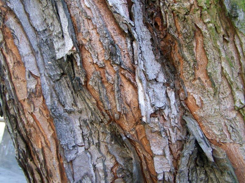 ?corce de tronc d'arbre r photo stock