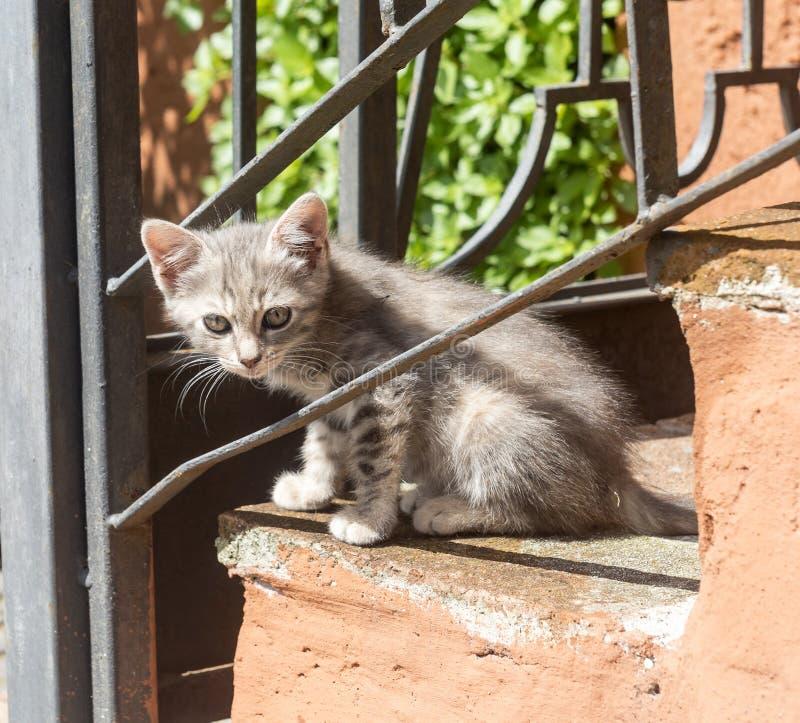 Corchiano (Ιταλία) Γάτες στοκ φωτογραφία