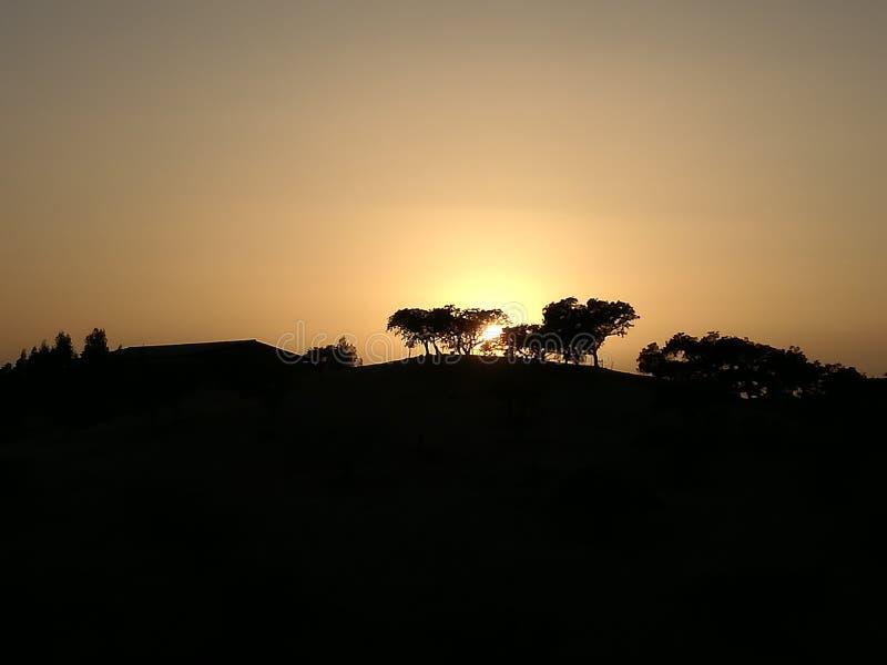 Corcho de las sombras de los sobreiros de la puesta del sol de Mértola Alentejo imagenes de archivo