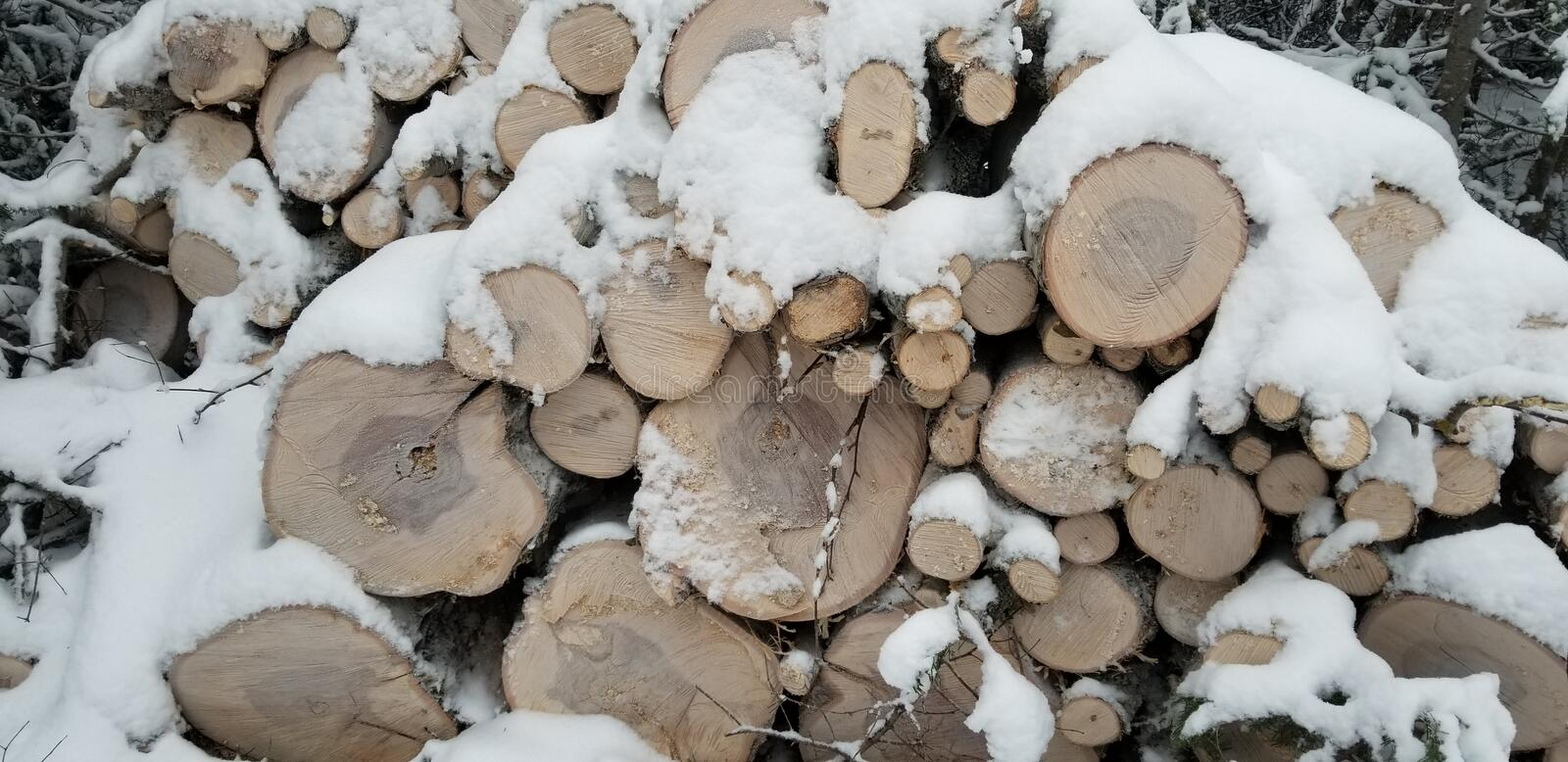 Cord of wood pile in the forest. Full of snow.  White winter. Wood log. Cord of wood pile in the forest. Full of snow stock photos
