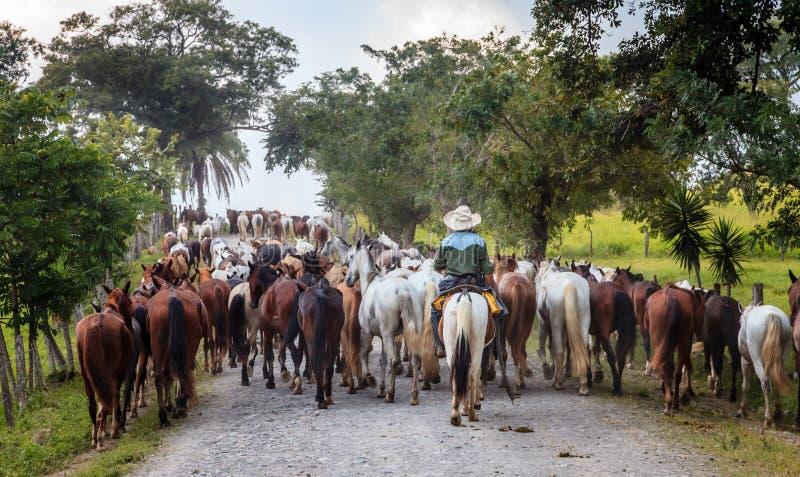 Corda dos cavalos em uma estrada pequena em Costa Rica imagem de stock royalty free
