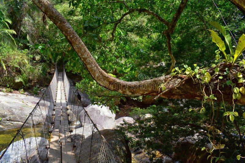 A corda e o fio suspenderam a ponte de suspensão através de um rio da selva no EL Eden por Puerto Vallarta México onde os filmes  foto de stock