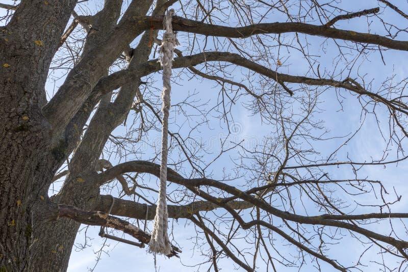 Corda spessa legata ad un albero, contro un fondo del cielo blu fotografie stock libere da diritti