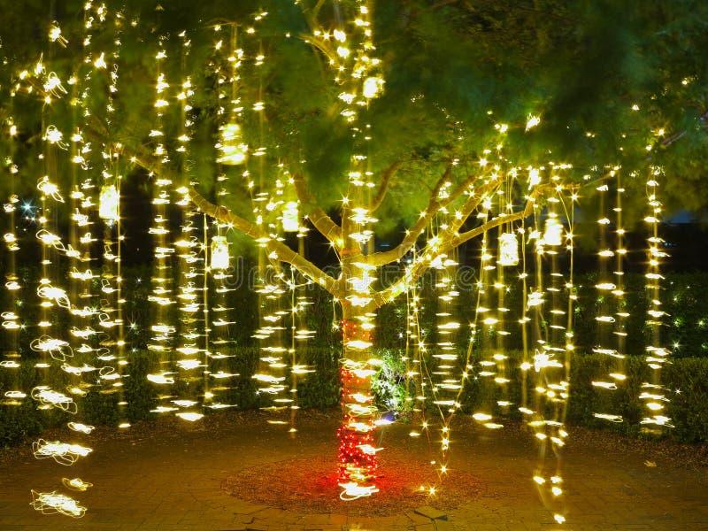 Cordas claras do feriado na árvore imagem de stock royalty free