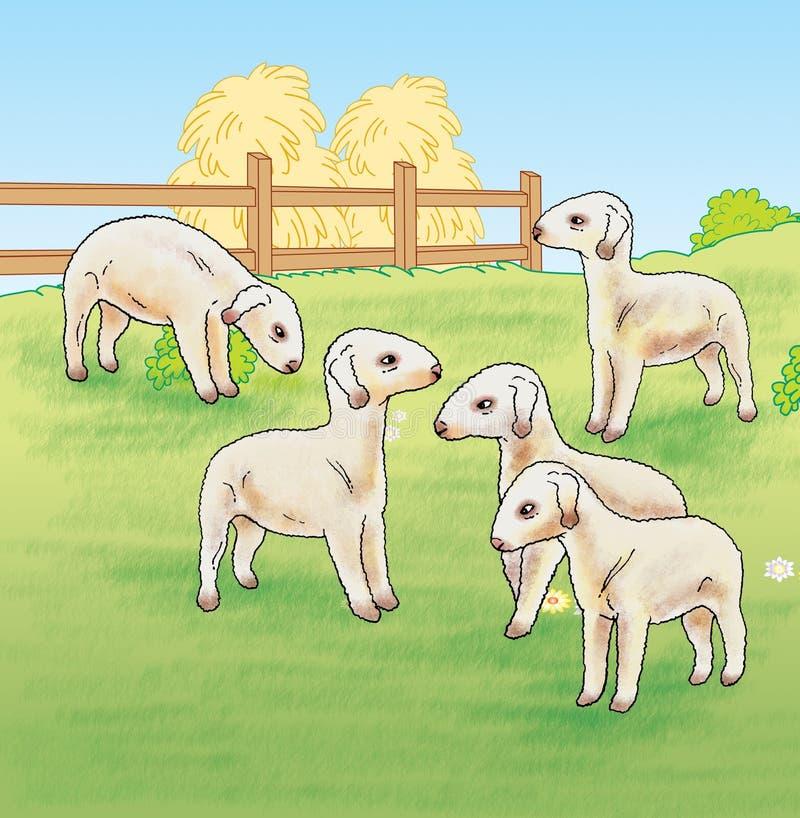 Cordeiros na exploração agrícola ilustração stock