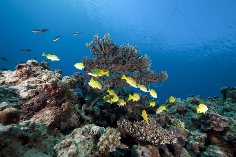 cordelettes et océan Bleu-rayés photographie stock
