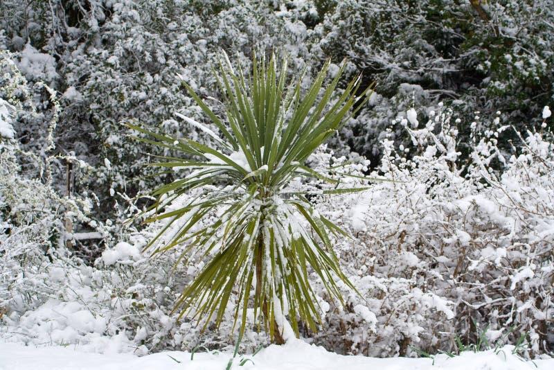 cordelyne śnieg obraz stock