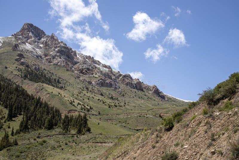 Cordilheira coberto de vegetação com os picos nevados da floresta do abeto vermelho e os pastos verdes kyrgyzstan fotografia de stock royalty free