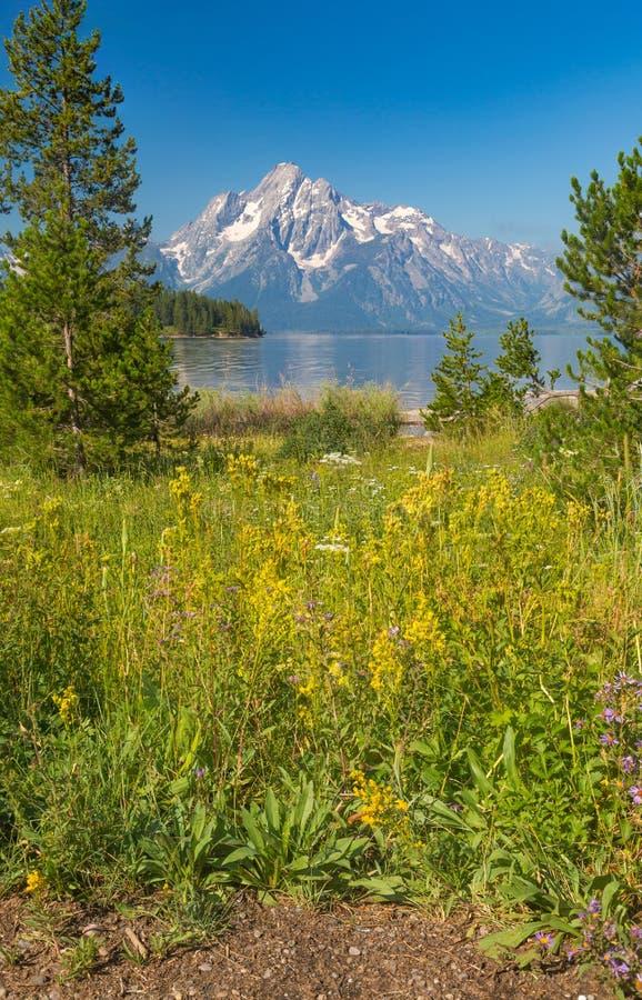 Cordilheira grande bonita do parque nacional de Teton em Wyoming, EUA foto de stock royalty free