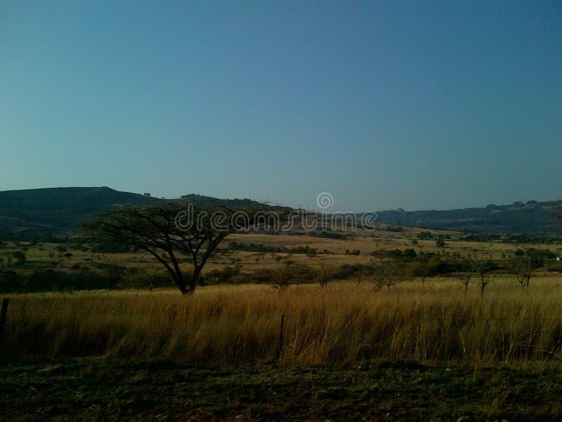Cordilheiras das naturezas com árvores e grama seca longa fotografia de stock royalty free