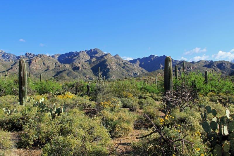 Cordillera al lado del barranco Arizona del oso foto de archivo libre de regalías