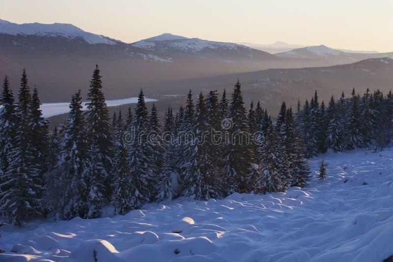 Cordillera Zyuratkul, paisaje del invierno nieve piceas foto de archivo