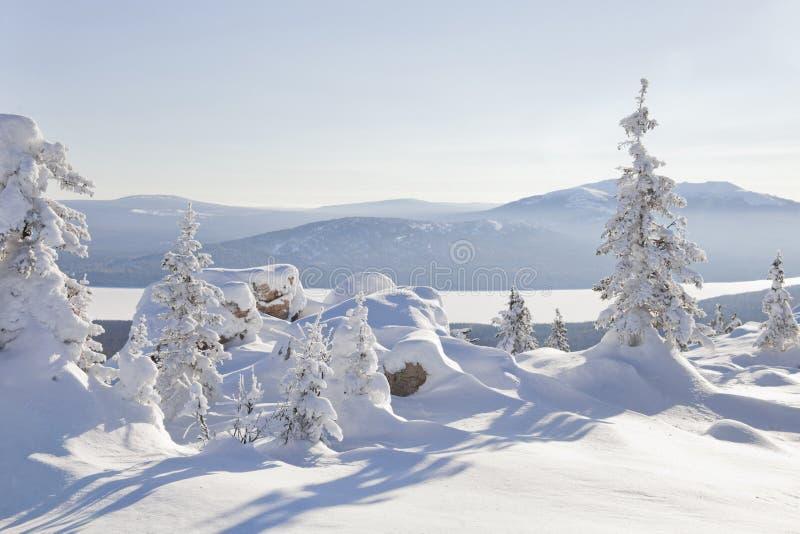 Cordillera Zyuratkul, paisaje del invierno Piceas nevadas imagen de archivo