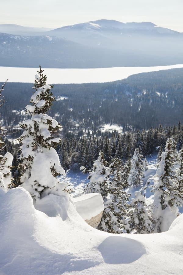 Cordillera Zyuratkul, paisaje del invierno Piceas nevadas imagen de archivo libre de regalías