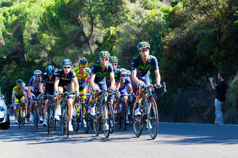 CORDOBA, SPAIN - August 26th, 2014: Alejandro Valverde (Movistar Team) in the main group, during a stage of La Vuelta. royalty free stock photo