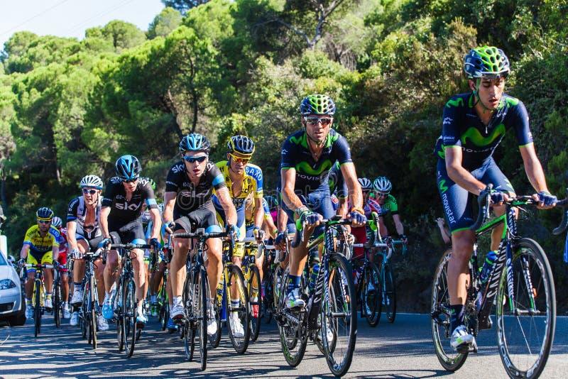 CORDOBA, SPANJE - Augustus zesentwintigste, 2014: Alejandro Valverde (Movistar-Team) in de belangrijkste groep, tijdens een stadi stock afbeeldingen