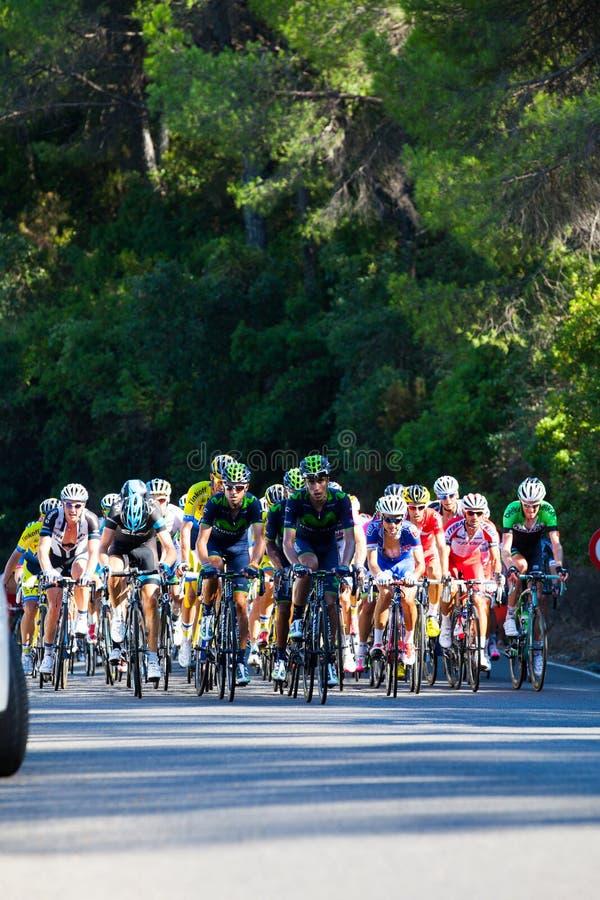 CORDOBA, SPANJE - Augustus zesentwintigste, 2014: Leidersgroep fietser tijdens een stadium in reis van Spanje stock afbeelding