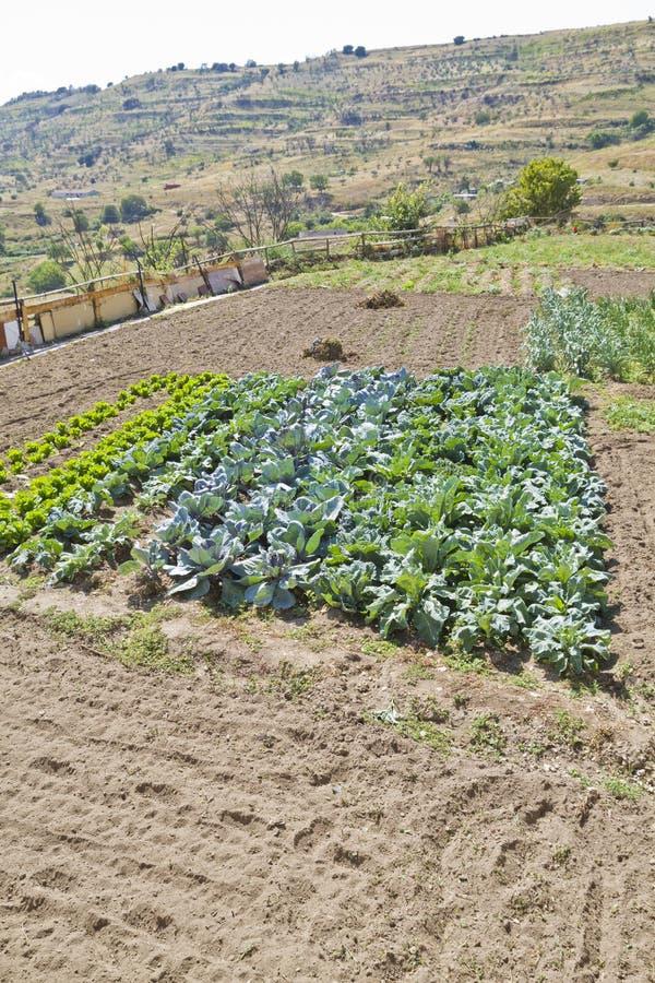 Cordon cultivé dans un horizontal rural image stock