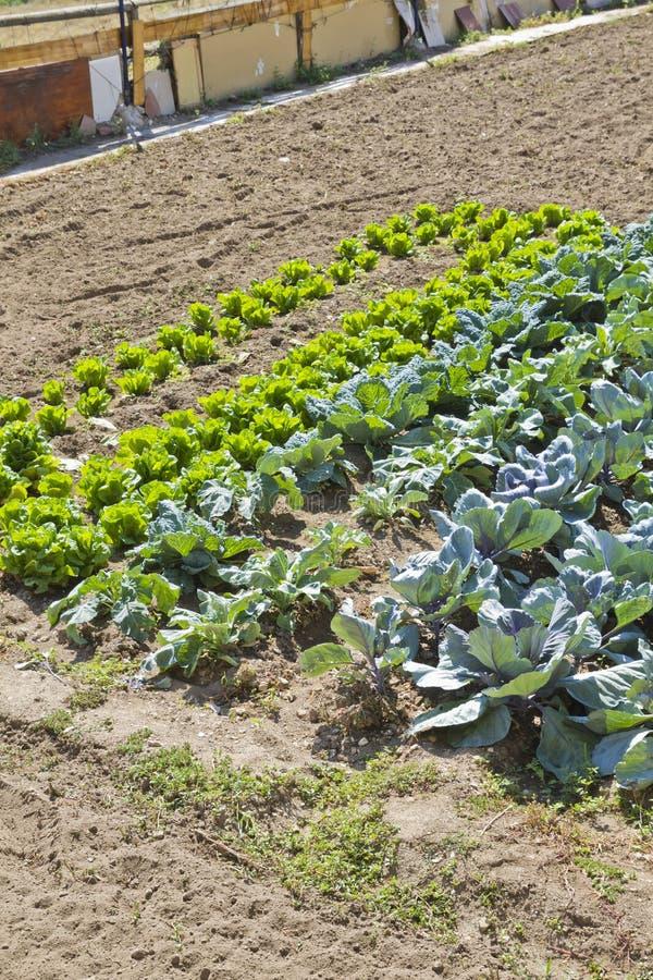 Cordon cultivé dans un horizontal rural photographie stock libre de droits