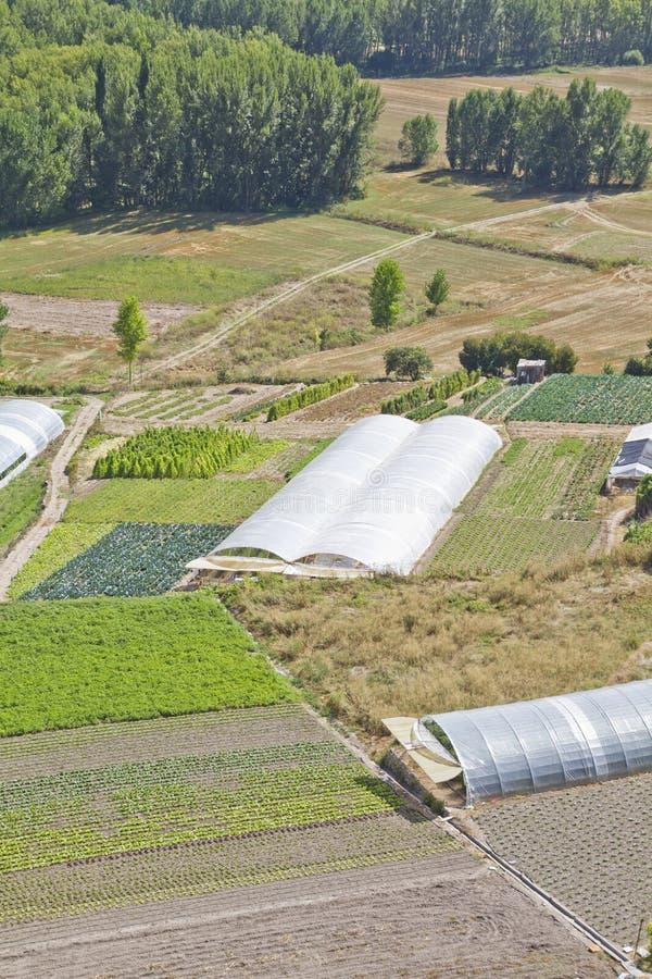Cordon cultivé dans un horizontal rural photo libre de droits