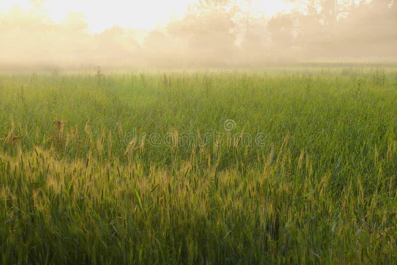 Cordon vert brumeux image libre de droits