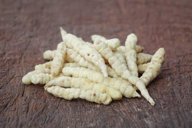 Cordyceps coltivato immagine stock libera da diritti