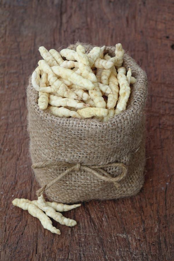 Cordyceps coltivato fotografia stock libera da diritti