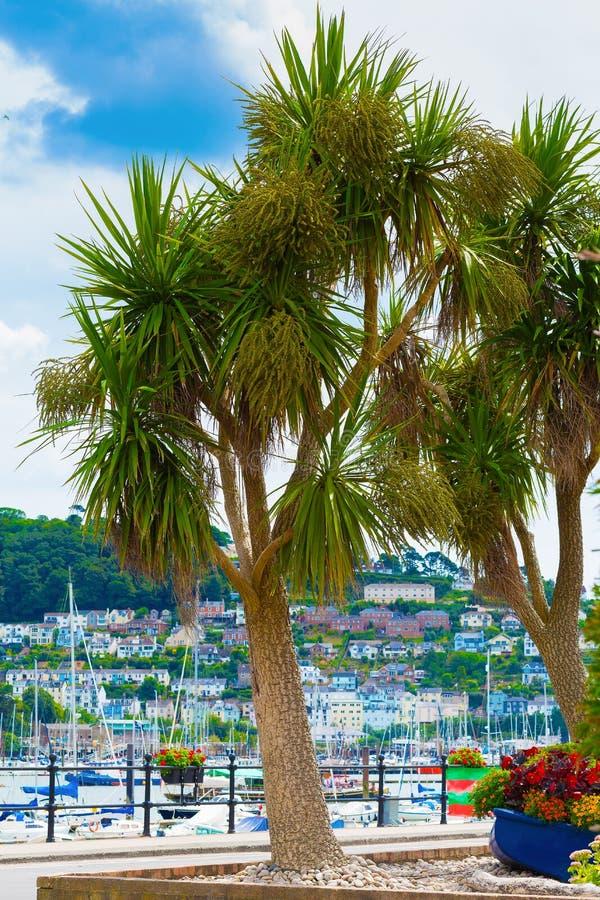 Cordyline de Harbourside photographie stock libre de droits