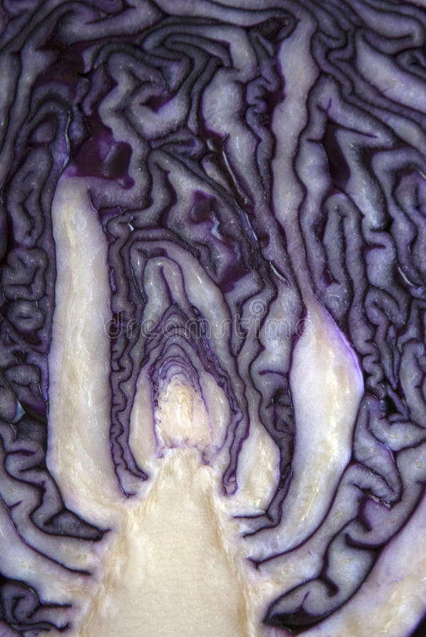 Core and inside pattern of a red cabbage sliced in half royalty free stock image