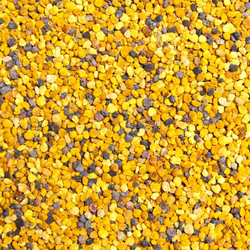 Download Coregone Lavarello Dell'ape Immagine Stock - Immagine di polline, struttura: 21550153