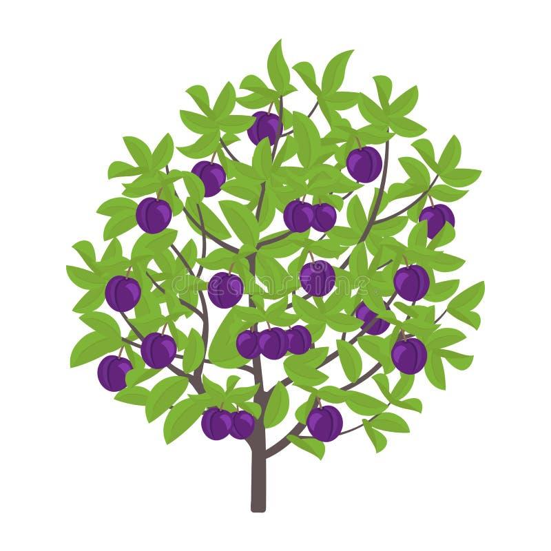 Сливовое дерево картинка для детей